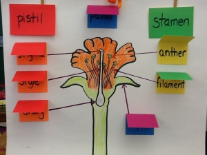 Bean Plant Lab, Prefix Foldable, Post-it Discussion 021